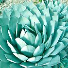 Giant Agave by Christine Chase Cooper