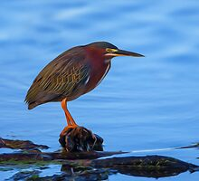 Green Heron in Breeding Plumage - Digital Oil by Paul Wolf
