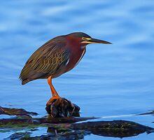 Green Heron in Breeding Plumage - Digital Oil by Paul Wolf