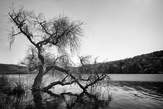 Lake in Napa by Francesco Carucci