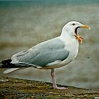 Noisy Herring Gull by Tarrby