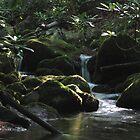 Appalachian Streamlight by Joshua Bales