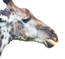 Giraffe profile up close ! by jozi1