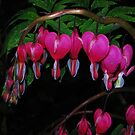 Bleeding Hearts in Spring by Tori Snow