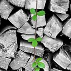 Climbing Plant by LeJour