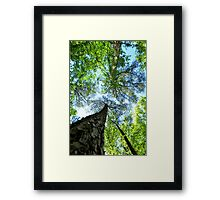 Trees at Cape Fear Framed Print