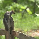 Squirrel at Cape Fear by Lolabud
