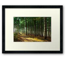 Forest Sun Rays Framed Print