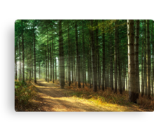 Forest Sun Rays Canvas Print