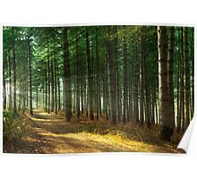 Forest Sun Rays Poster
