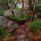 Split Rock at Oatley Park by Michael Matthews