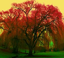 colourful tree by lainer15