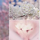 Sakura Triptych by Lisa Knechtel