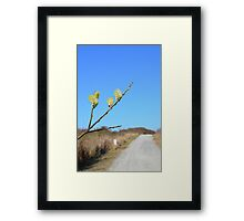 Hiking path along the coast  in spring  Framed Print