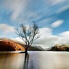 Lake Tree by Beverly Cash