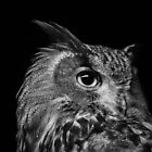 Eagle Owl by Lesley Scott