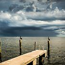 Pelican Pier St Petersburg by Casey Peel