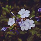 Violet by ellenor