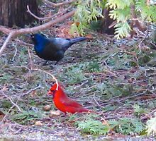 The Grackle and the Cardinal by MarianBendeth