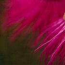 Blush  by Ladyshark