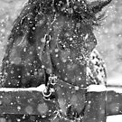 HORSE IN SNOW GREETING CARD by dagokid