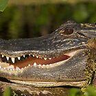 Alligator at Wekiwa Springs by Matthew Elliott