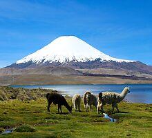 Chungara Lake, Chile 2 by Kurt  Van Wagner