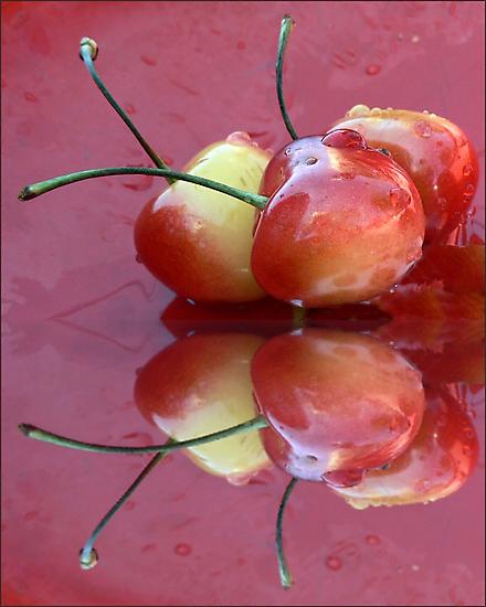 Rainier Cherries Three by paintingsheep
