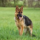 Only German Shepherds by Sandy Keeton
