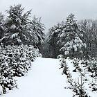 Christmas Tree Farm in Winter by joycemlheureux