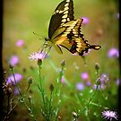 Giant SwallowTail by Nazareth