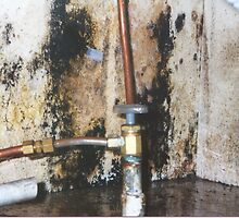 Plumbing Leak Repairs by addieturner62