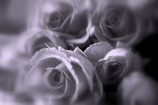 Roses in Soft Tones by Lozzar Flowers & Art