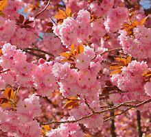 Cherry Tree by eleanor p.  labrozzi