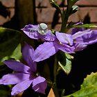 Purple Lurker by G-J-Davies
