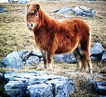Beautiful Pony in Rocky Landscape by CHINOIMAGES