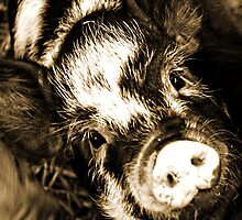 piggie by seagrass-cowes
