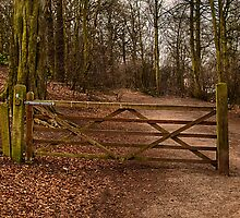 Gate in the Wood by Glen Allen
