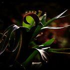 Botanical by pratt1ak