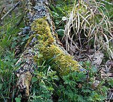 Woodland Decay by Sue Robinson