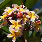 Flowers of Hawaii by Timothy L. Gernert
