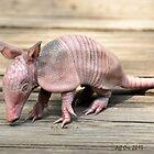 Baby Armadillo (Dasypus novemcinctus) by Jeff Ore