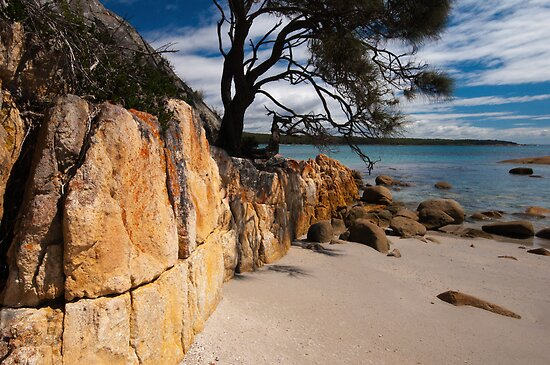 Unmistakably Tasmania by Barbara Burkhardt