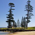 Norfolk Pines, Norfolk Island. Australia. by johnrf