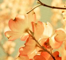Vintage Pink Spring Flowers Sticker