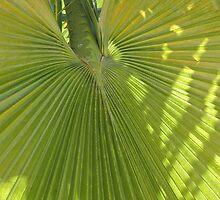 Turks and Caicos Palm VI by studio20seven