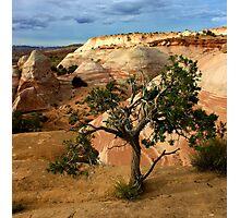 Escalante Tree Photographic Print
