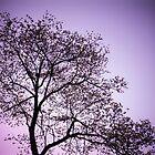 Purple Tree by ddunson