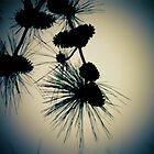 Pine by ddunson