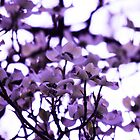 Purple by ddunson